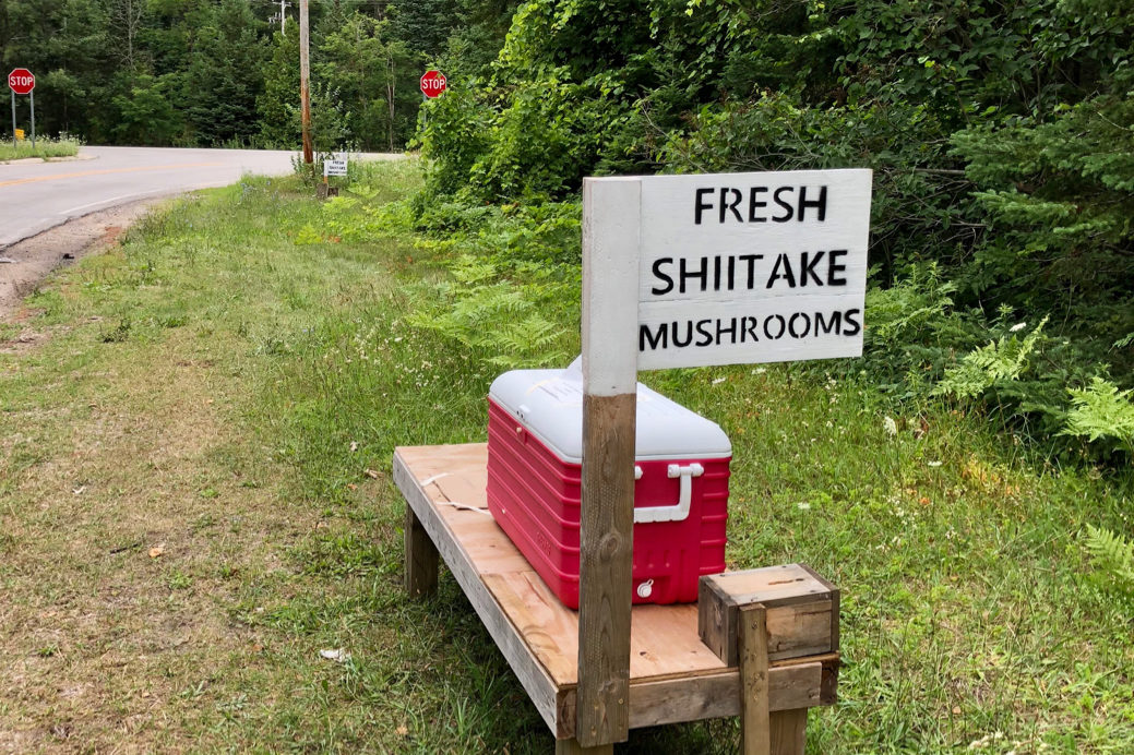 Fresh Shiitake Mushroom Stand - One Day Woman