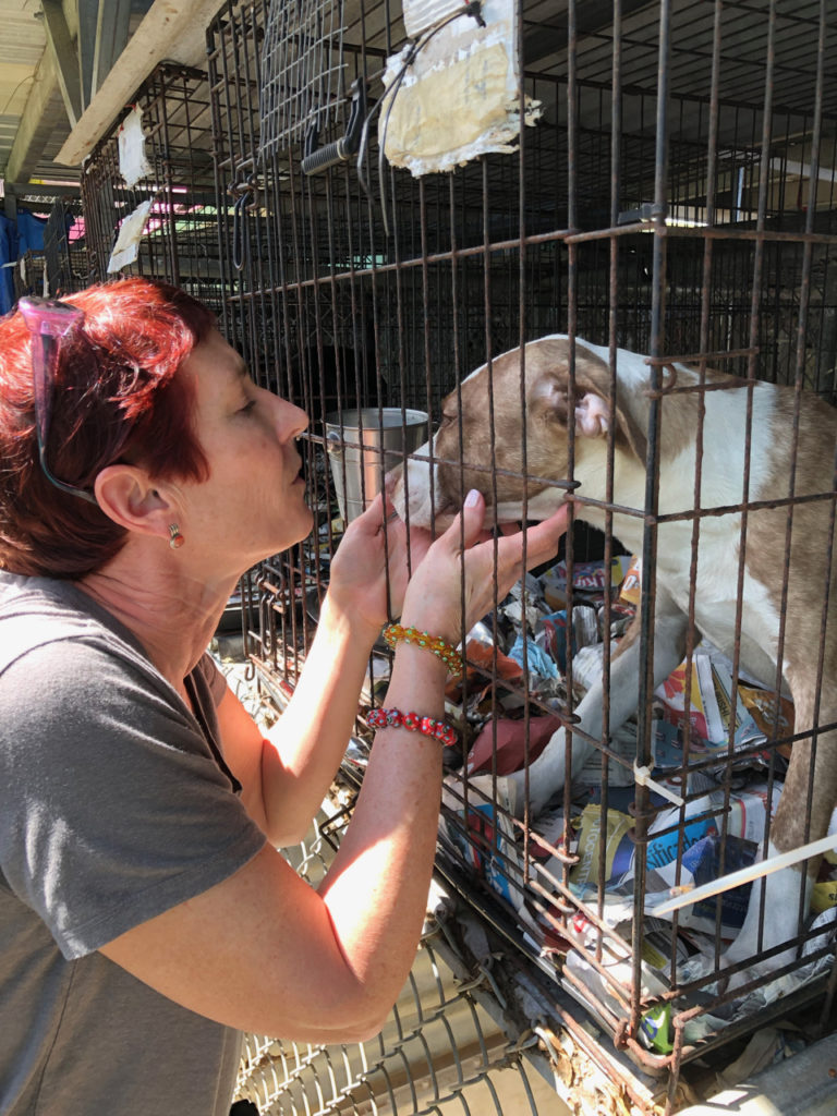 A picture of One Day Woman comforting a rescue dog at Save a Sato in San Juan Puerto Rico