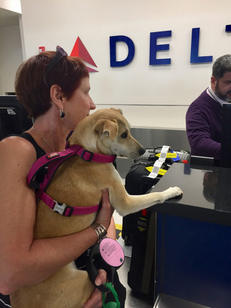A picture of One Day Woman holding a small Sato dog at the Delta counter in Luis Munoz Marin International Airport in Puerto Rico.