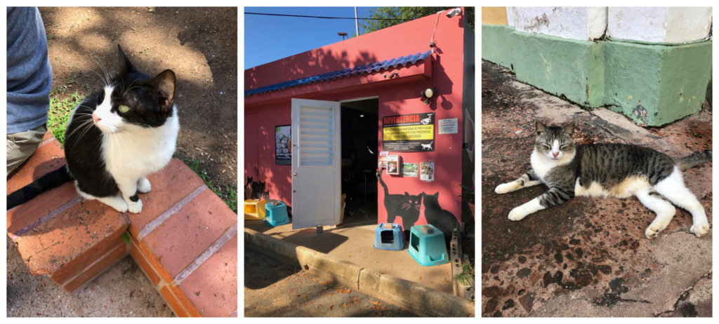 Three pictures in Old San Juan Puerto Rico. One of a black and white cat, one of a pink cat rescue building, and one of a calico and white cat laying down on the sidewalk